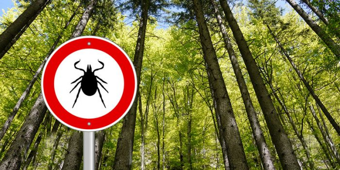 The-Truth-About-Lyme-Disease
